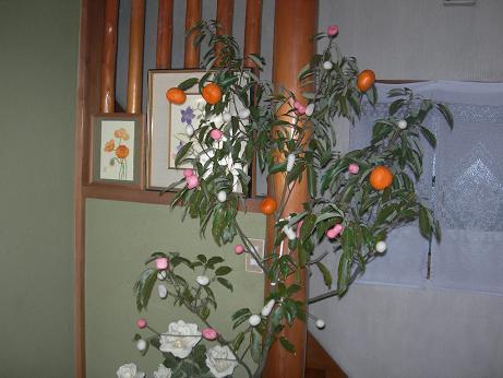 2010年01月15日_DSCN5659
