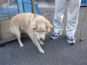 本庄老犬112