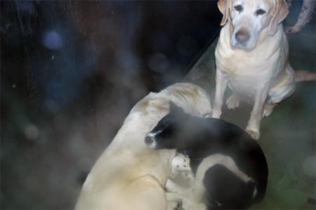 子犬_convert_20100322230459
