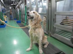 千葉市動物保護指導センターゴル雄なし816_convert_20100812200356