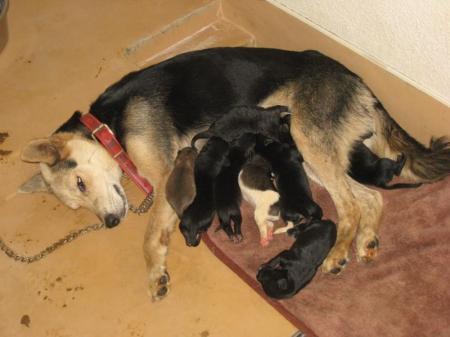 母犬_convert_20100911192311