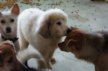 グレ子犬_convert_20100917155125