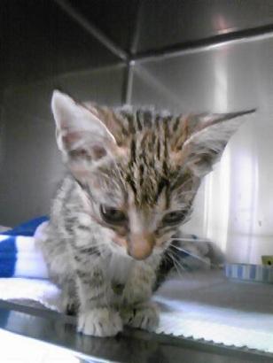 p-cat02.jpg