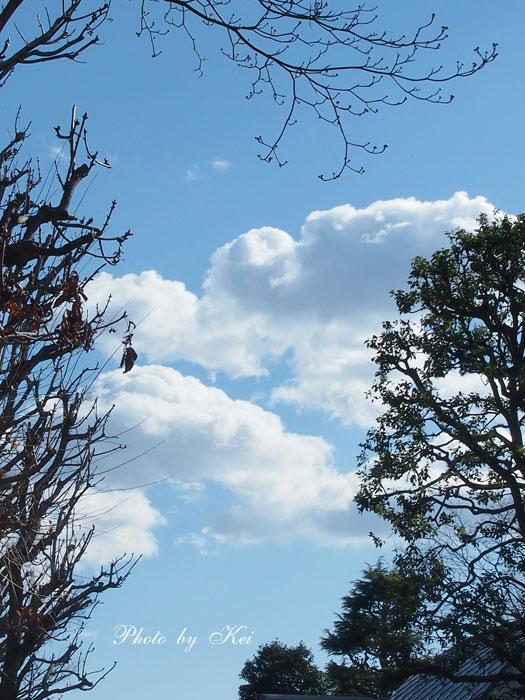 青空&木々♪