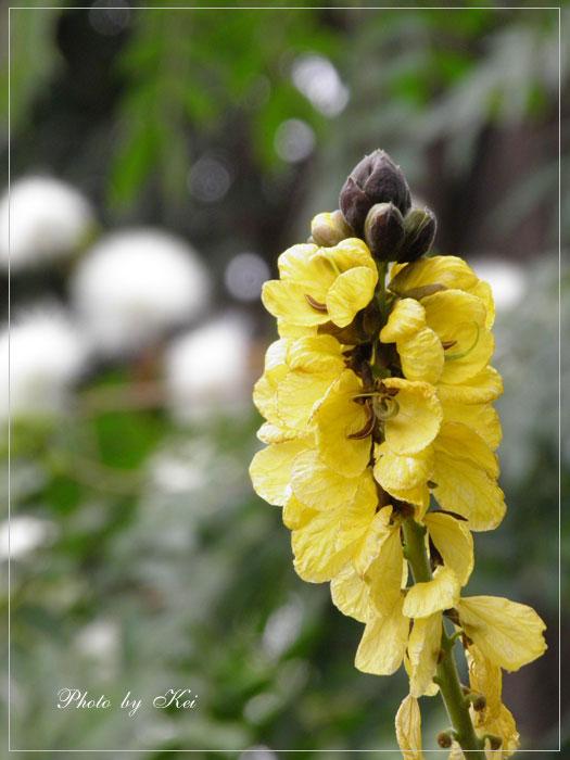 温室のお花♪