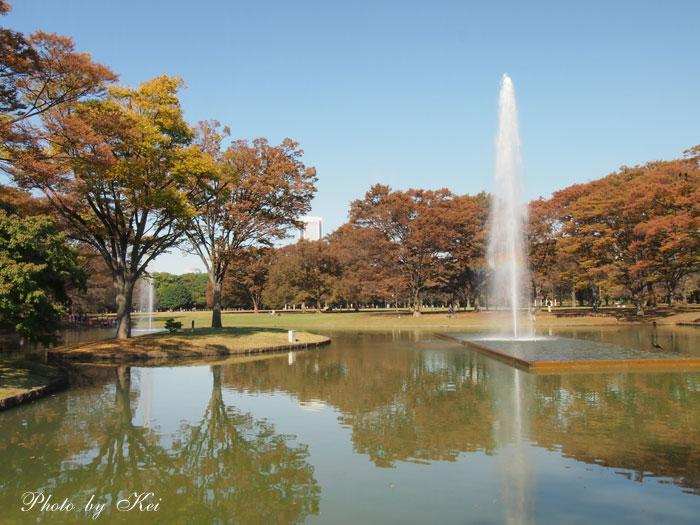 代々木公園♪