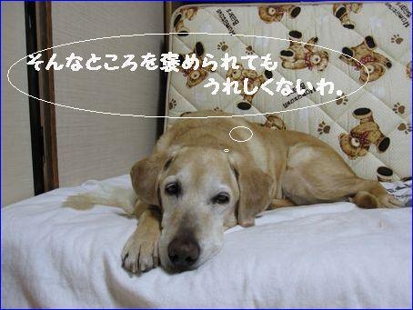 川崎の息子のところに行ってきます。