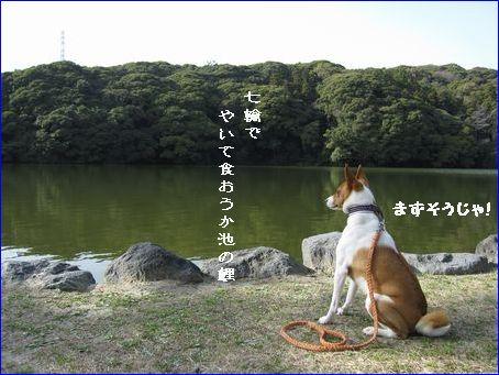 桜が池・・・きたない。