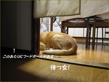 食器の前に座ってる・・・