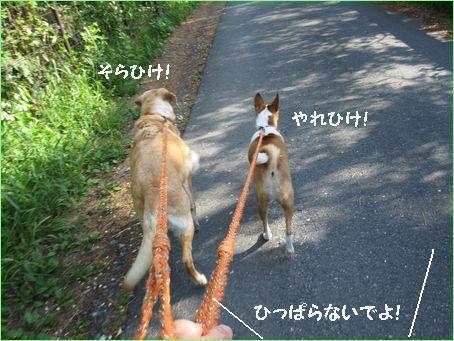 松林コースです。