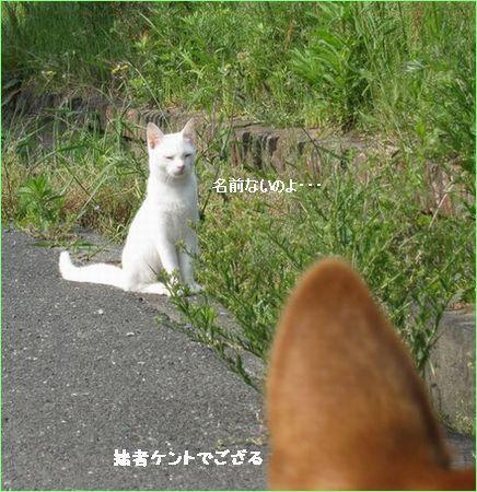 可愛い猫でした。