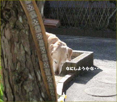 お散歩して来ました。