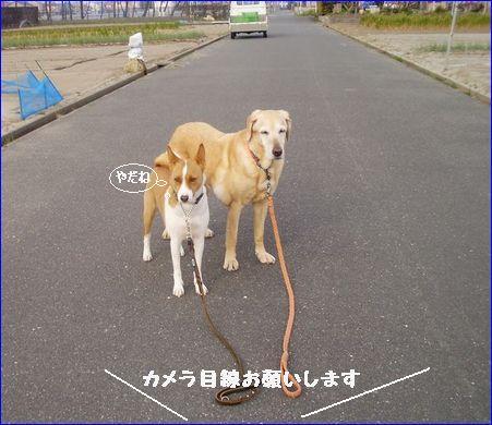 やる気のない犬。