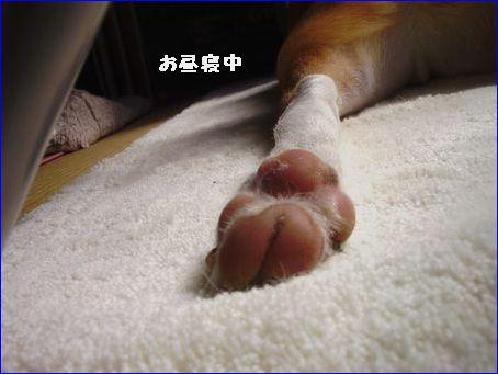 ケントの足