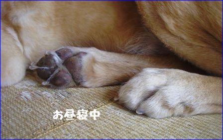 はなちゃんの足