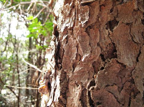 カサカサの木a
