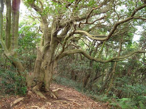 大きな木a