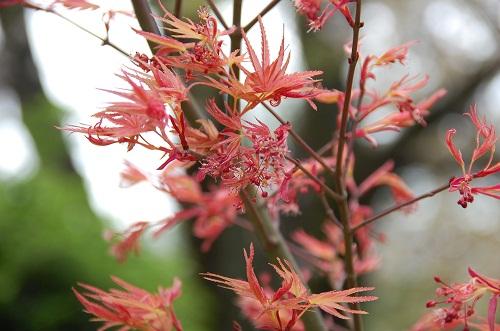 las hojas rojas 1