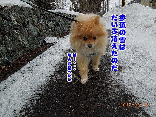 20120324_01.jpg