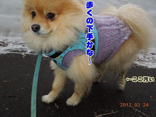 20120324_05.jpg