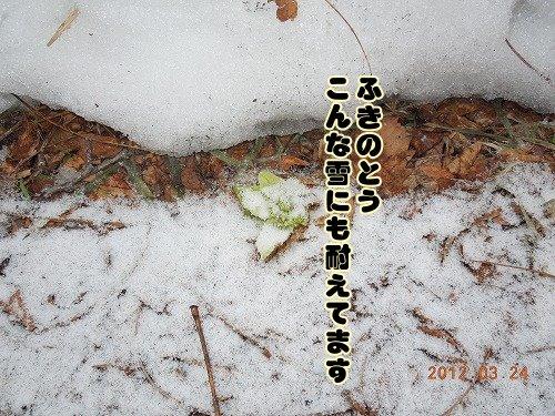 20120324_07.jpg