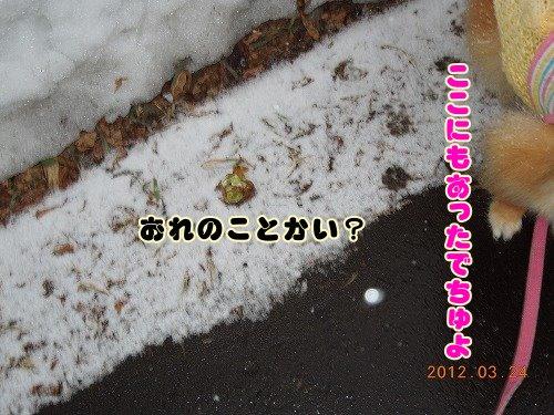 20120324_08.jpg