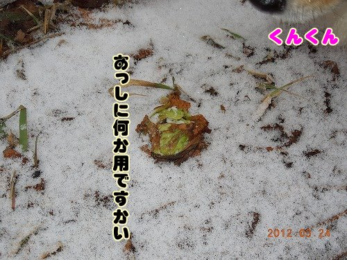20120324_09.jpg