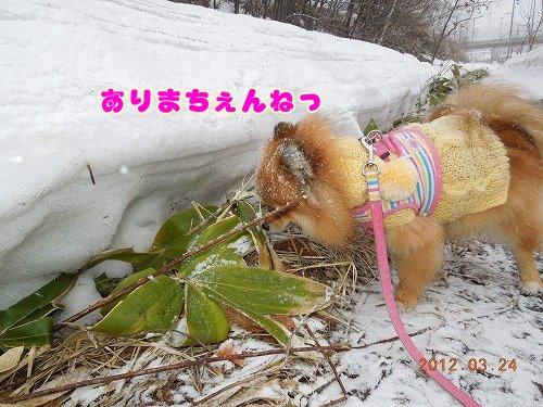 20120324_10.jpg