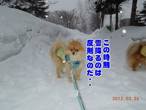 20120324_11.jpg
