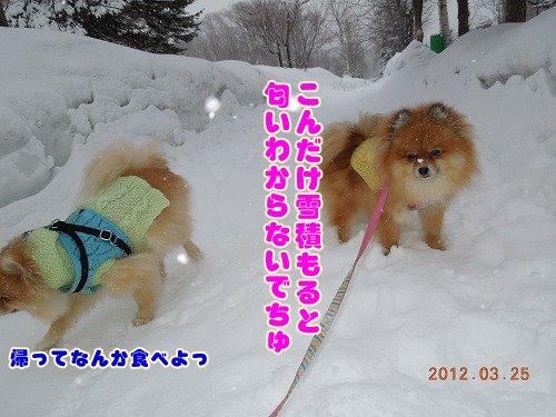 20120324_12.jpg