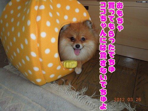 2012032601.jpg