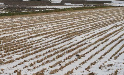 田んぼにも雪