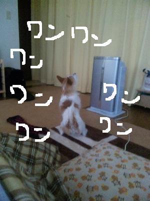 SBSH0619_convert_20110209104539 mudai