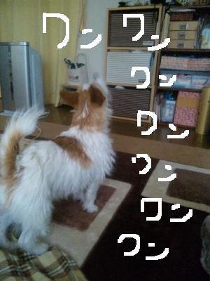 SBSH0624_convert_20110209104830 mudai