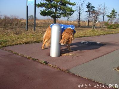 k-2009-11-6-7.jpg
