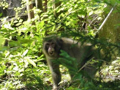 猿130830三頭山 (3)S済