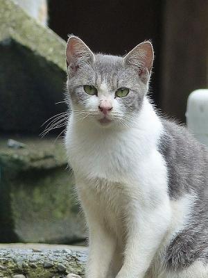 猫131007FC2 (14)