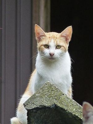 猫131007FC2 (16)