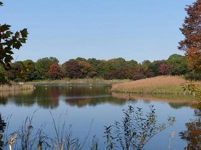 紅葉水鳥の池131108昭和記念公園 (2)S済