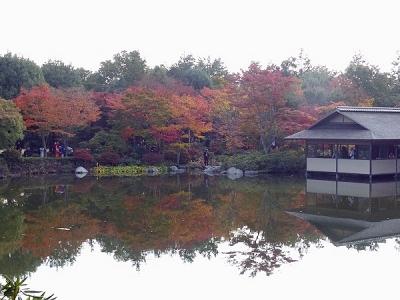 紅葉日本庭園131108昭和記念公園 (123)S済