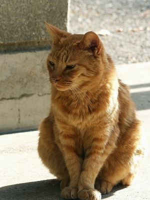 猫131108昭和記念公園 (5)S済