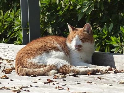猫131108昭和記念公園 (11)S済