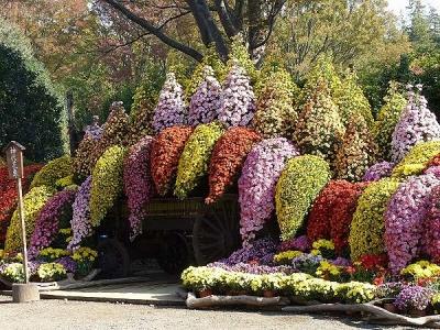 菊花展131117神代植物公園 (3)S済