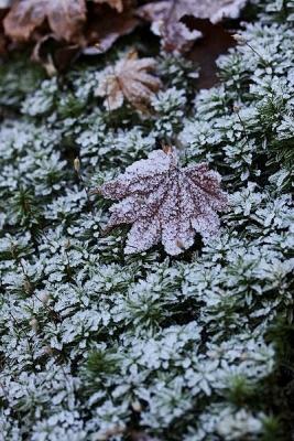霜131119湯の沢峠 (75)S済