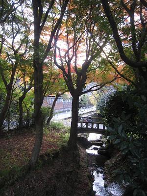 20101125_043.jpg