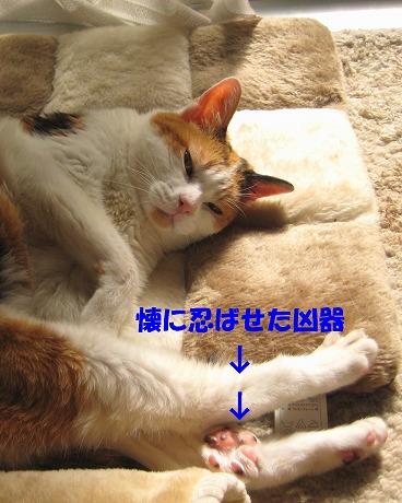 IMG_komugi_20101012195343.jpg