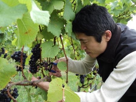 greenharvest2 web