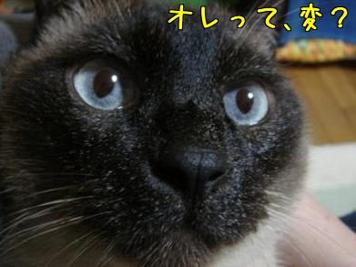mq_aQlH2.jpg