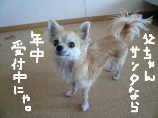 P1050575-deji.jpg