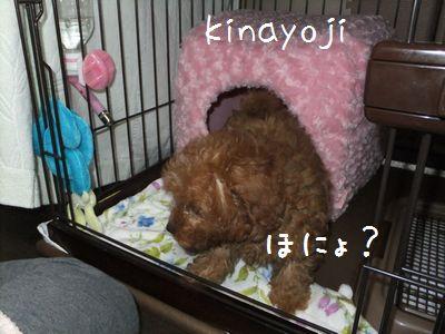 きなこ幼少7